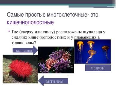 Самые простые многоклеточные- это кишечнополостные Где (сверху или снизу) рас...