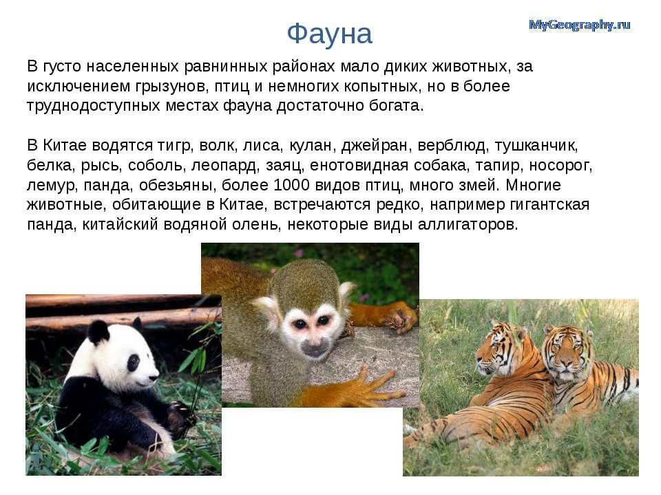 Фауна В густо населенных равнинных районах мало диких животных, за исключение...