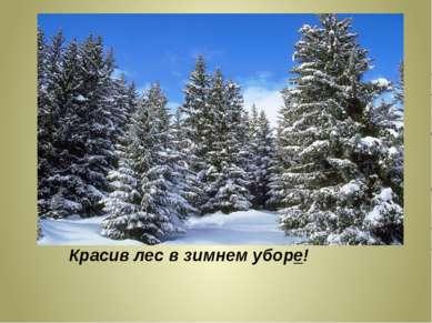 Деревья опушились блестящим инеем. Красив лес в зимнем уборе!