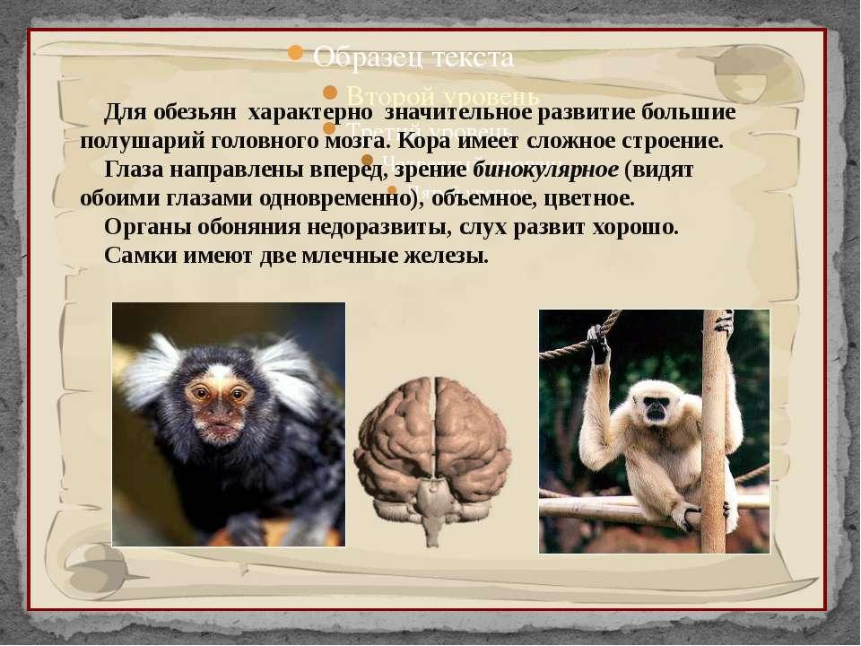 Для обезьян характерно значительное развитие большие полушарий головного мозг...