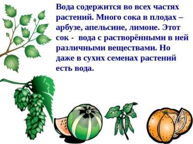Вода содержится во всех частях растений. Много сока в плодах – арбузе, апельс...