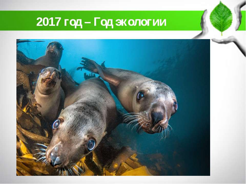 2017 год – Год экологии