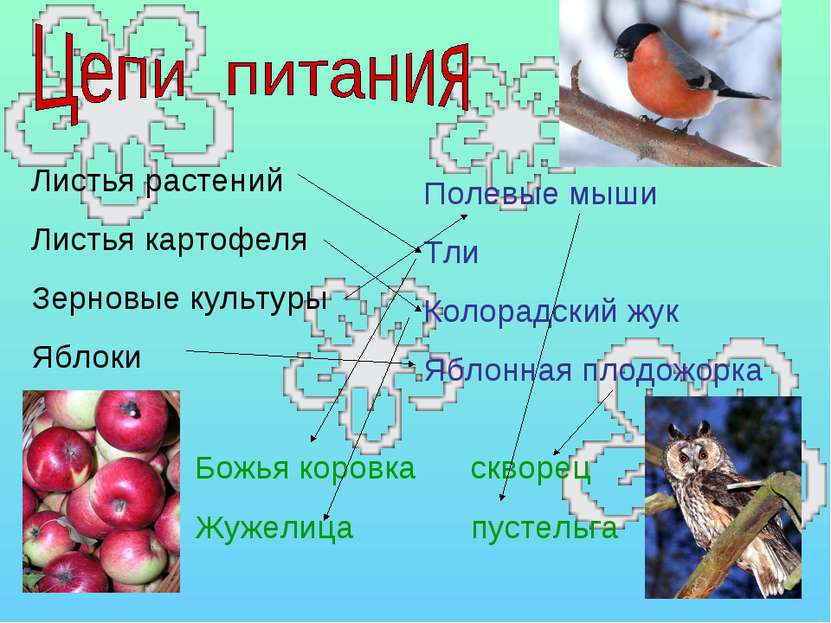 Листья растений Листья картофеля Зерновые культуры Яблоки Полевые мыши Тли Ко...