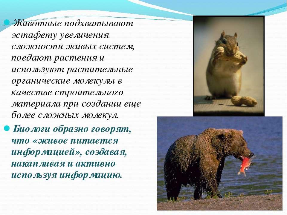 Животные подхватывают эстафету увеличения сложности живых систем, поедают рас...