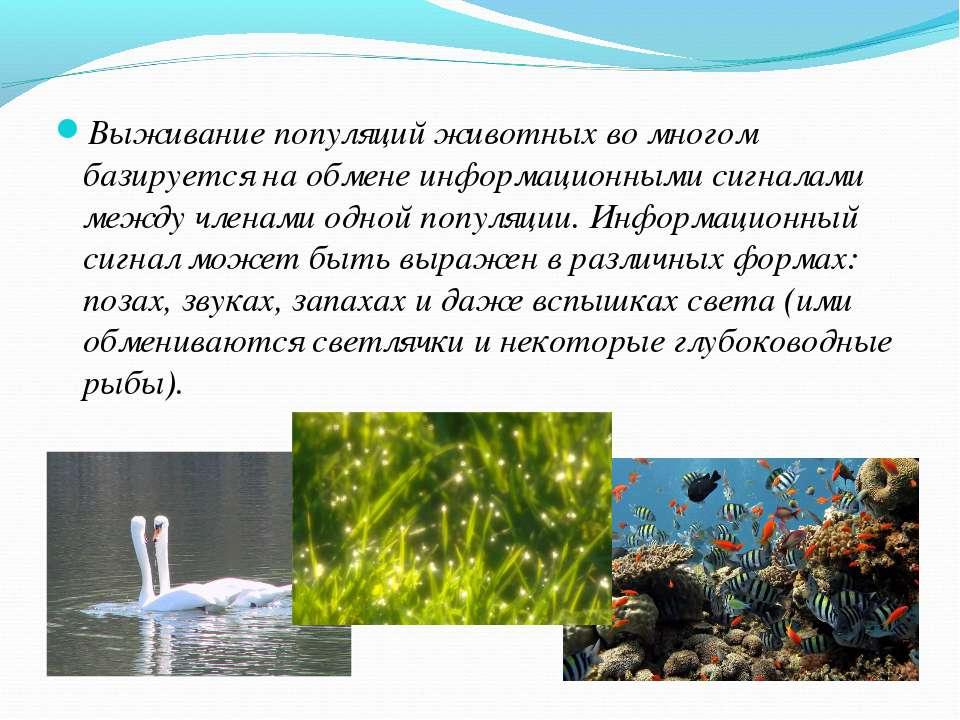 Выживание популяций животных во многом базируется на обмене информационными с...