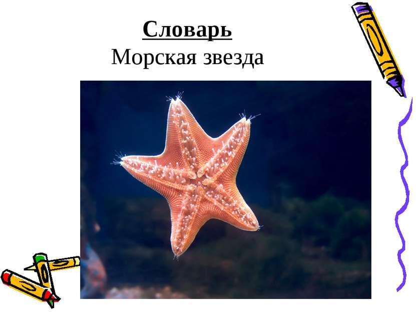 Словарь Морская звезда