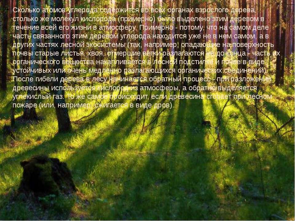Сколько атомов углерода содержится во всех органах взрослого дерева, столько ...