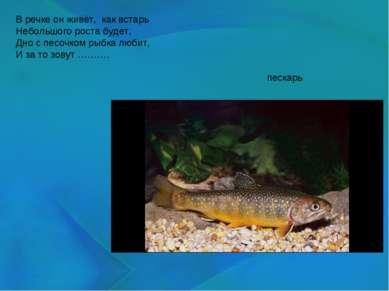 В речке он живёт, как встарь Небольшого роста будет, Дно с песочком рыбка лю...