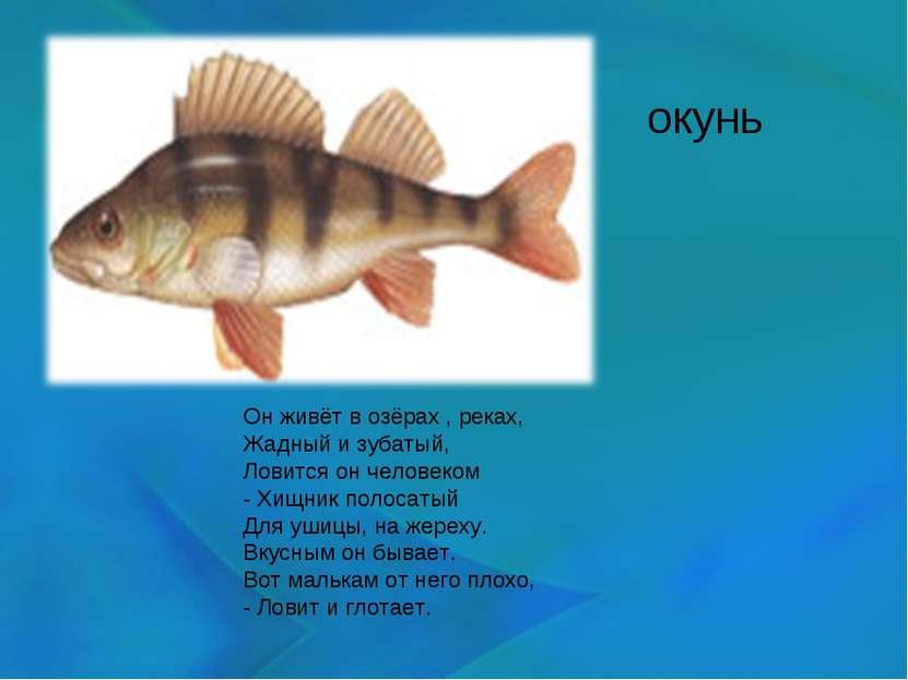 окунь Он живёт в озёрах , реках, Жадный и зубатый, Ловится он человеком - Хищ...
