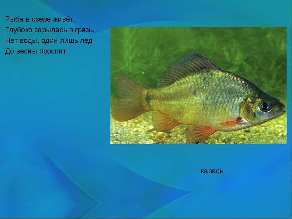 Рыба в озере живёт, Глубоко зарылась в грязь. Нет воды, один лишь лёд- До вес...