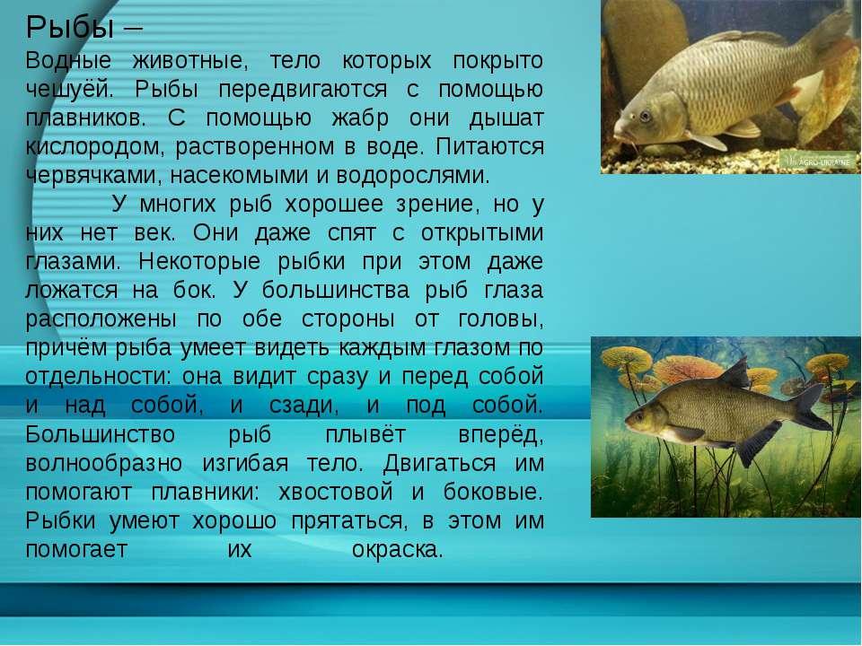Рыбы – Водные животные, тело которых покрыто чешуёй. Рыбы передвигаются с пом...