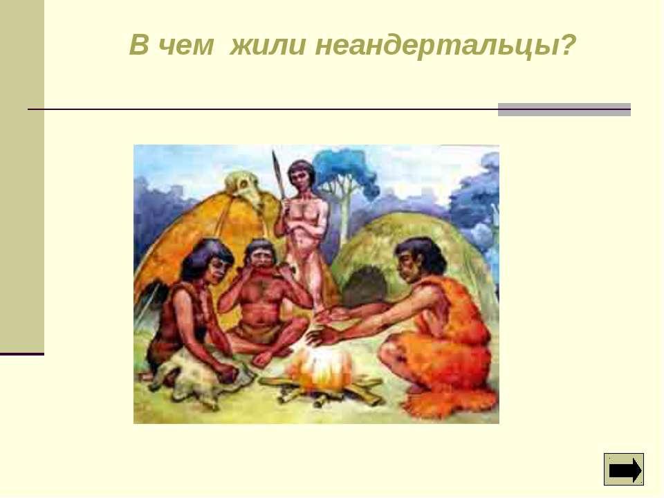 В чем жили неандертальцы?