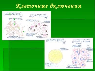 Клеточные включения