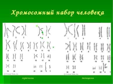 Хромосомный набор человека мужчины женщины