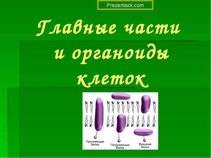 Главные части и органоиды клеток Prezentacii.com
