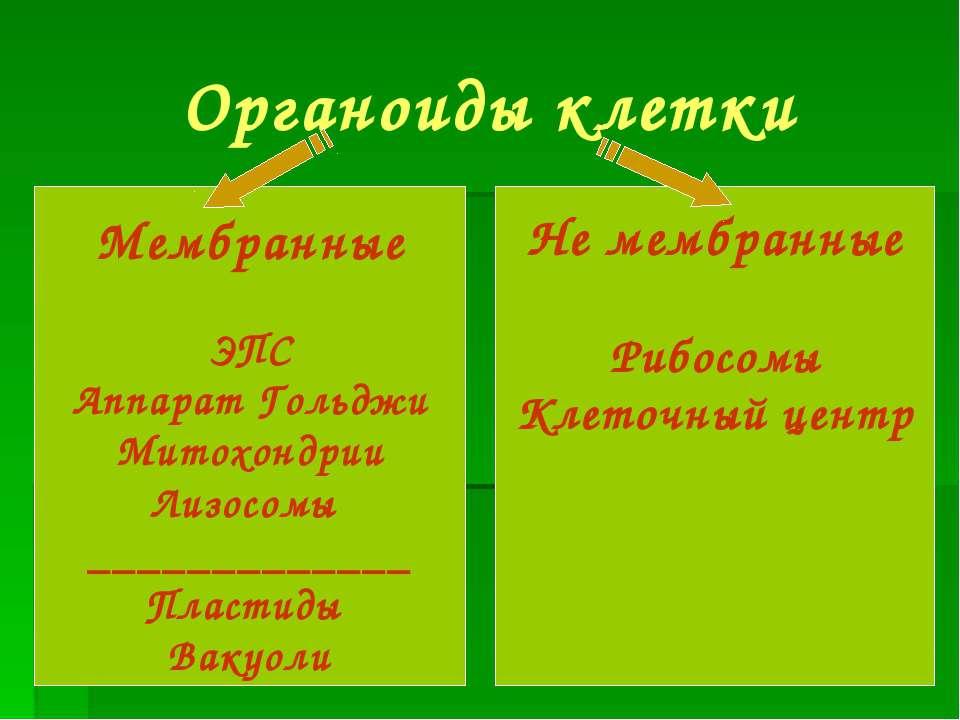 Органоиды клетки Мембранные ЭПС Аппарат Гольджи Митохондрии Лизосомы ________...