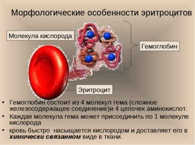 Морфологические особенности эритроцитов Гемоглобин состоит из 4 молекул гема ...