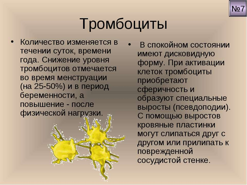 Тромбоциты Количество изменяется в течении суток, времени года. Снижение уров...