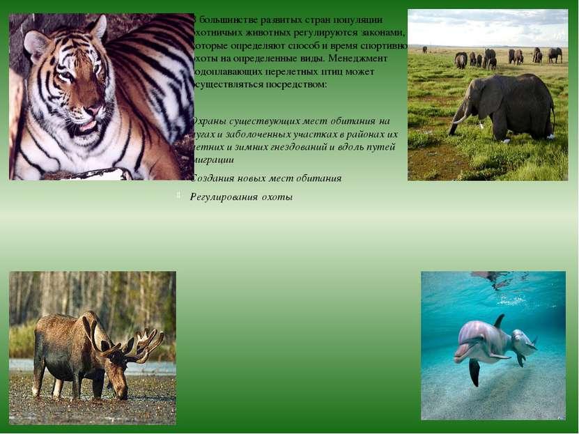 В большинстве развитых стран популяции охотничьих животных регулируются закон...