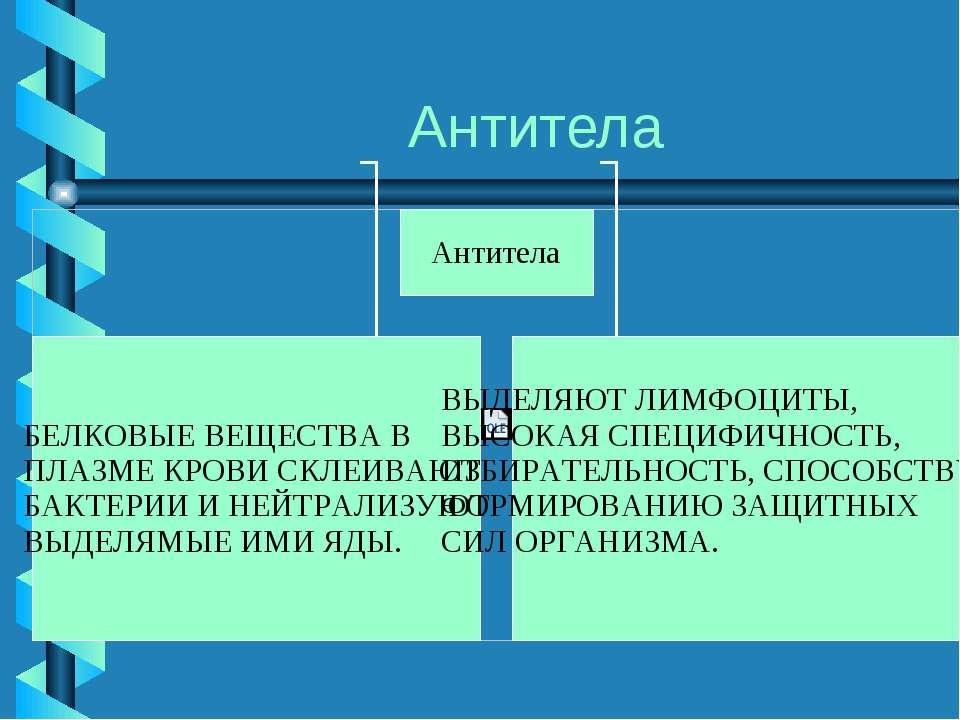 Антитела