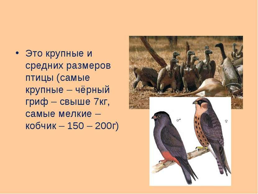 Это крупные и средних размеров птицы (самые крупные – чёрный гриф – свыше 7кг...