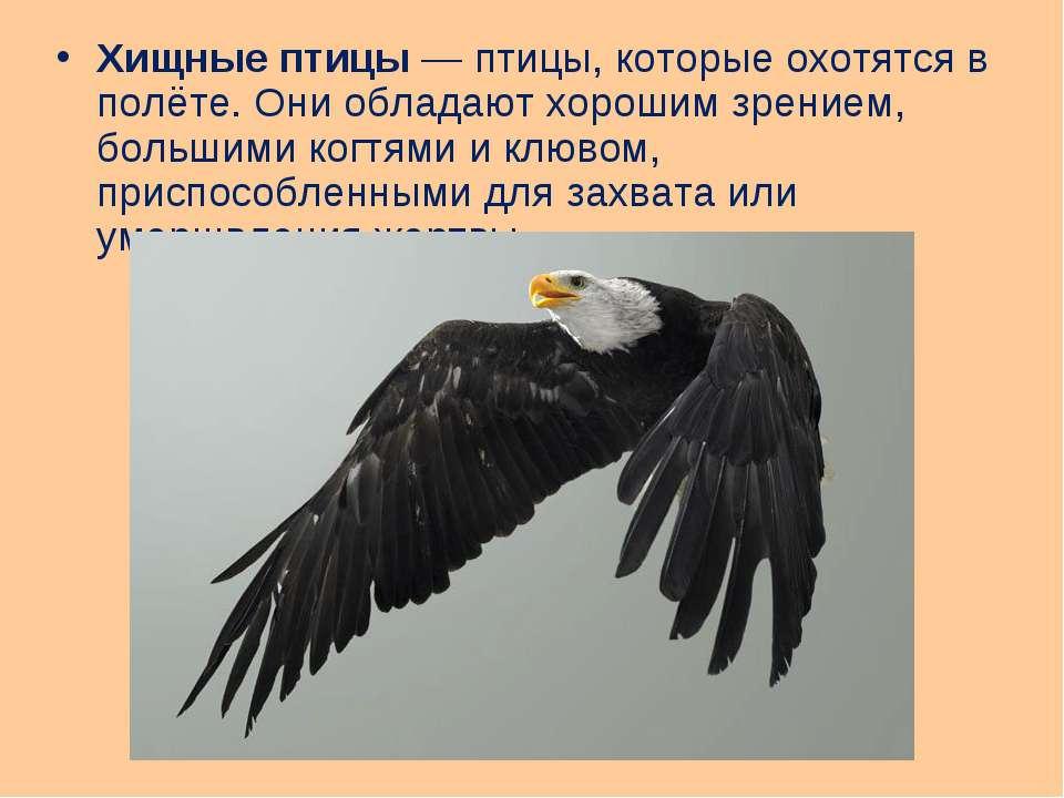 Хищные птицы— птицы, которые охотятся в полёте. Они обладают хорошим зрением...