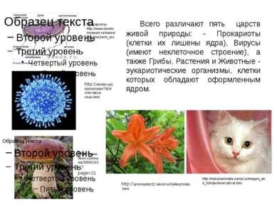 Всего различают пять царств живой природы: - Прокариоты (клетки их лишены ядр...