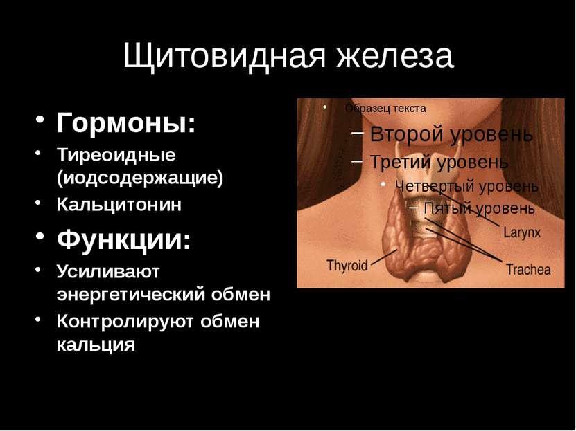 Щитовидная железа Гормоны: Тиреоидные (иодсодержащие) Кальцитонин Функции: Ус...