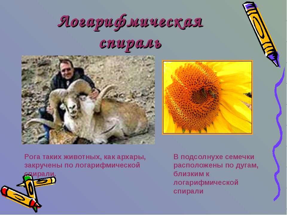 Логарифмическая спираль Рога таких животных, как архары, закручены по логариф...