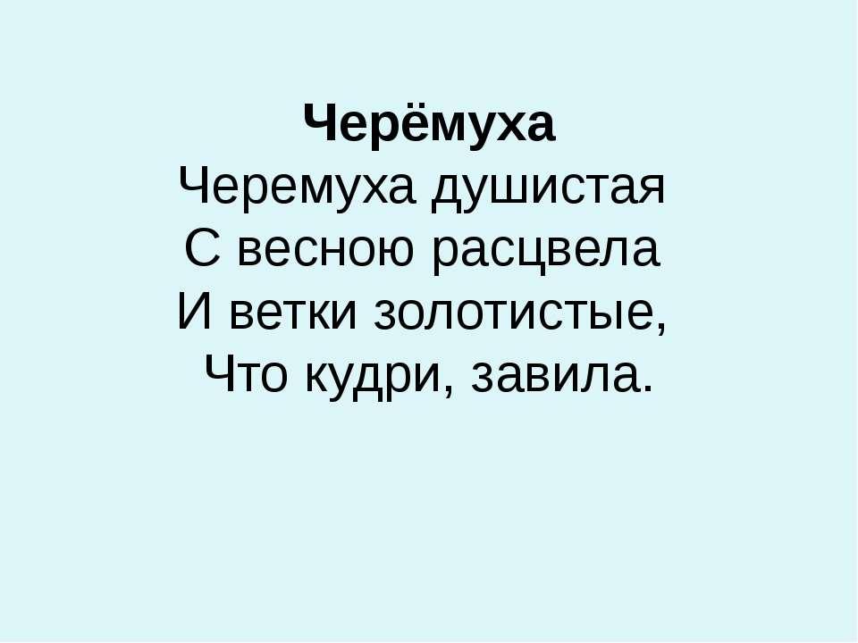 Черёмуха Черемухадушистая С весною расцвела И ветки золотистые, Что куд...
