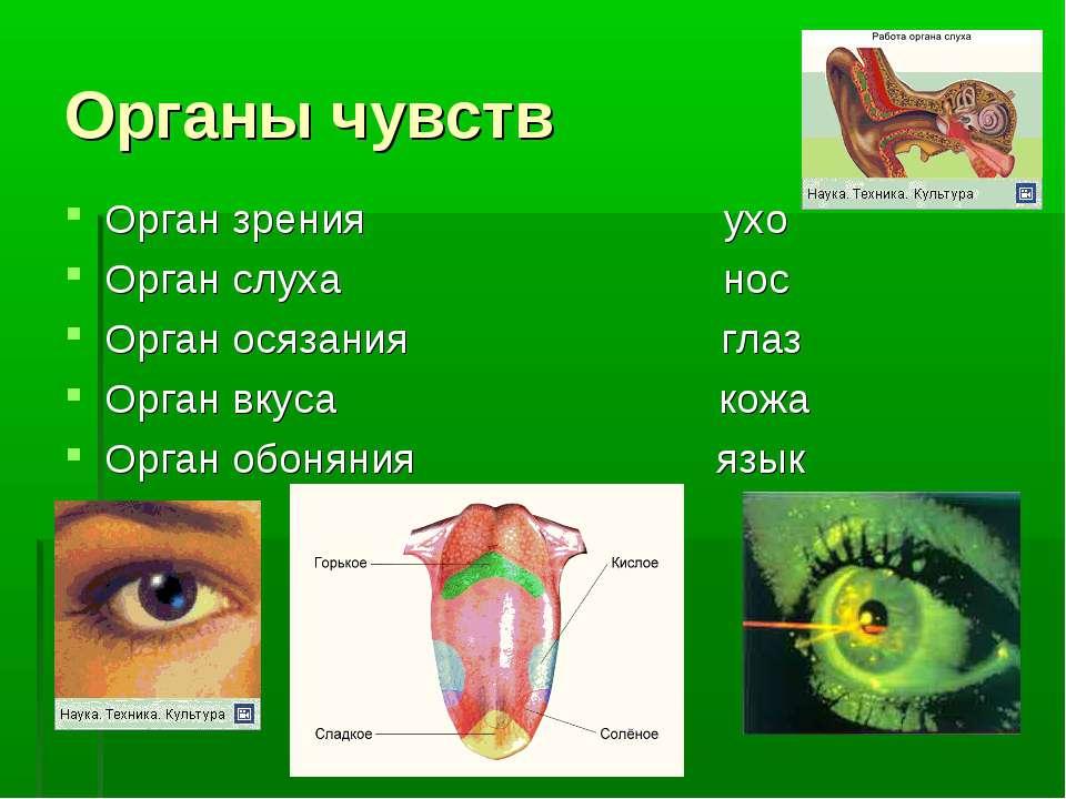 Органы чувств Орган зрения ухо Орган слуха нос Орган осязания глаз Орган вкус...