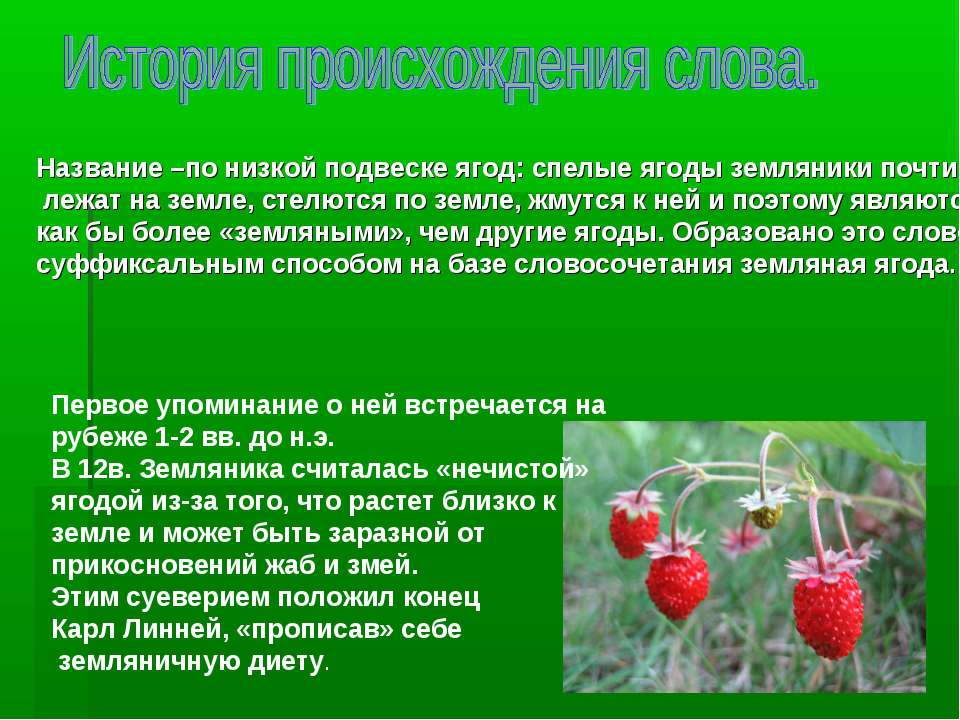 Название –по низкой подвеске ягод: спелые ягоды земляники почти лежат на земл...