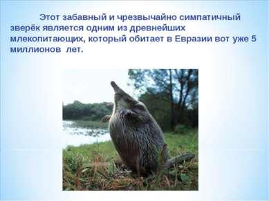 Этот забавный и чрезвычайно симпатичный зверёк является одним из древнейших м...