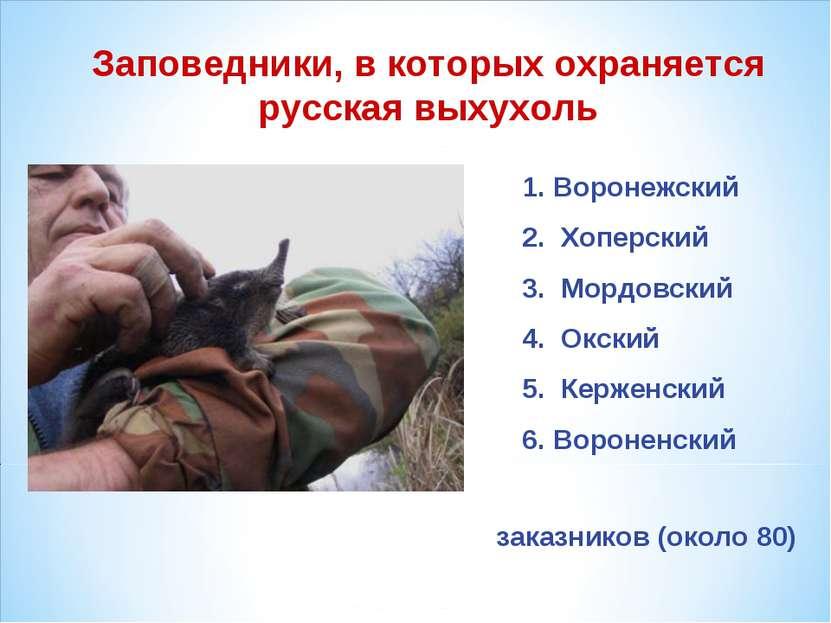 Заповедники, в которых охраняется русская выхухоль Воронежский Хоперский Морд...