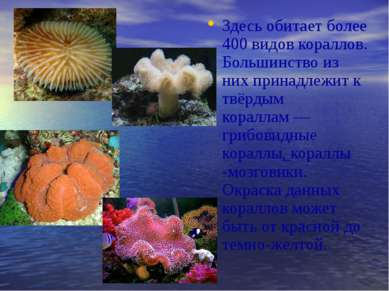 Здесь обитает более 400 видов кораллов. Большинство из них принадлежит к твёр...