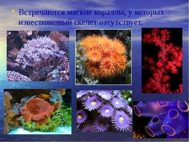 Встречаются мягкие кораллы, у которых известняковый скелет отсутствует.