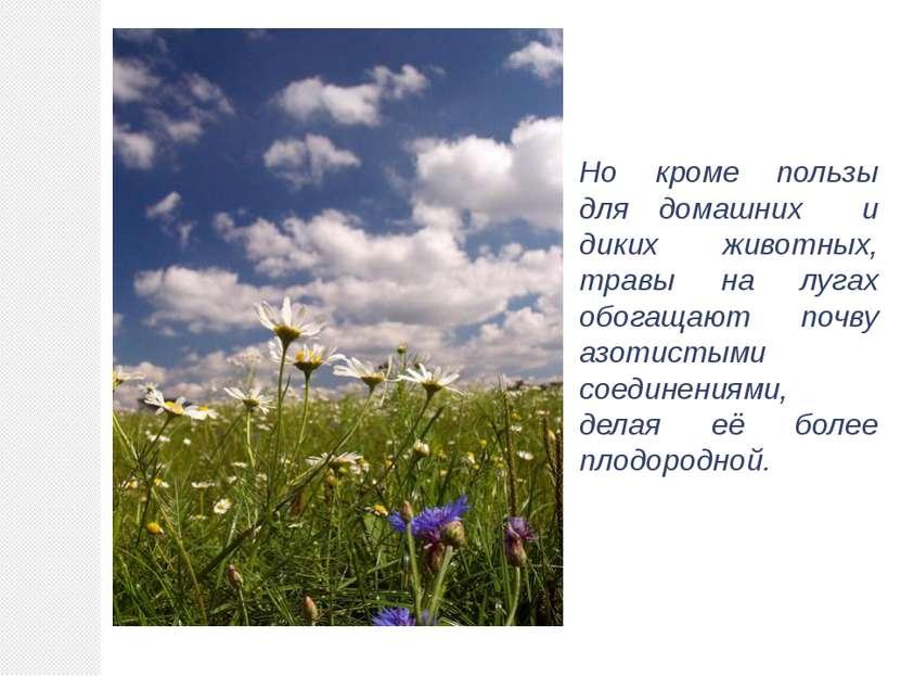 Но кроме пользы для домашних и диких животных, травы на лугах обогащают почву...