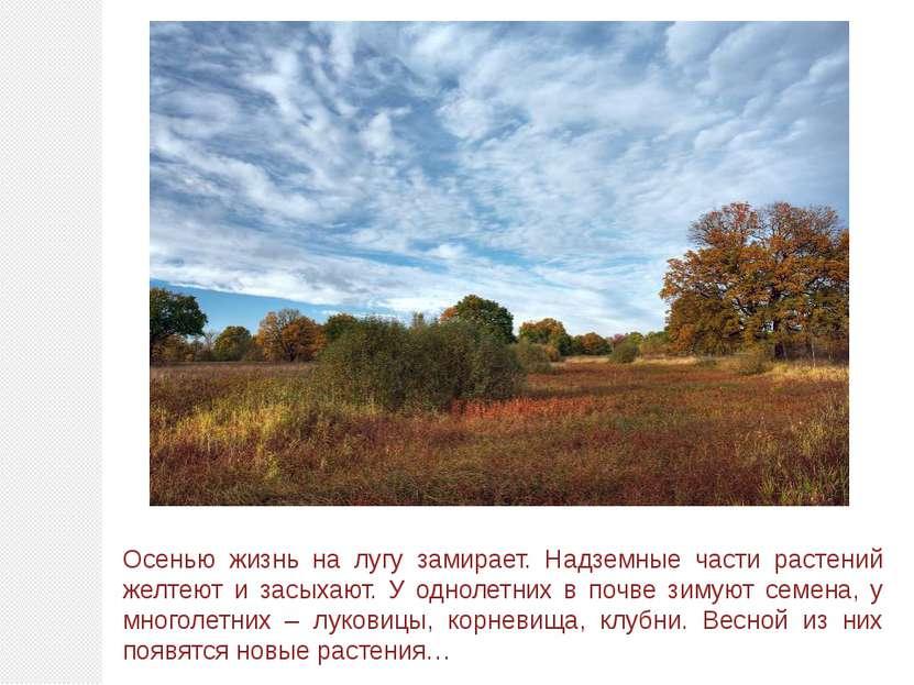 Осенью жизнь на лугу замирает. Надземные части растений желтеют и засыхают. У...