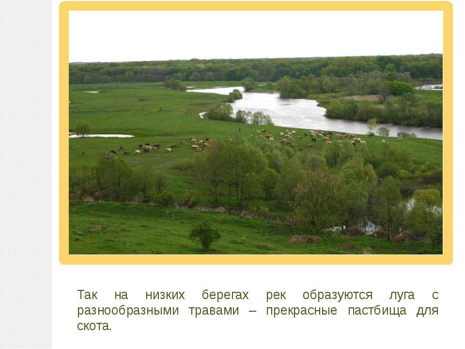 Так на низких берегах рек образуются луга с разнообразными травами – прекрасн...
