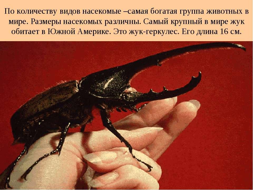 По количеству видов насекомые –самая богатая группа животных в мире. Размеры ...