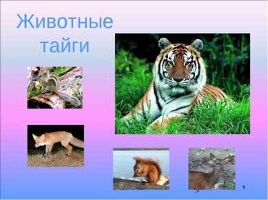 * Животные тайги