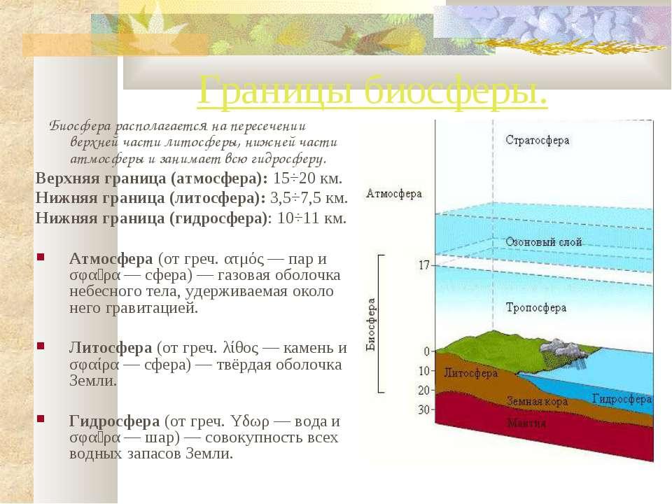 Границы биосферы. Биосфера располагается на пересечении верхней части литосфе...