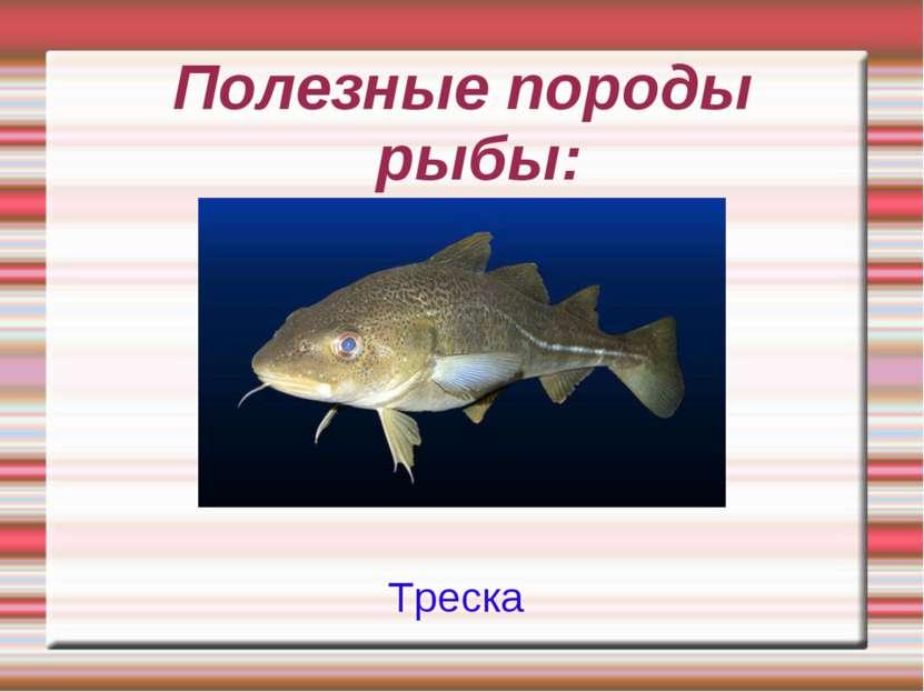 Полезные породы рыбы: Треска