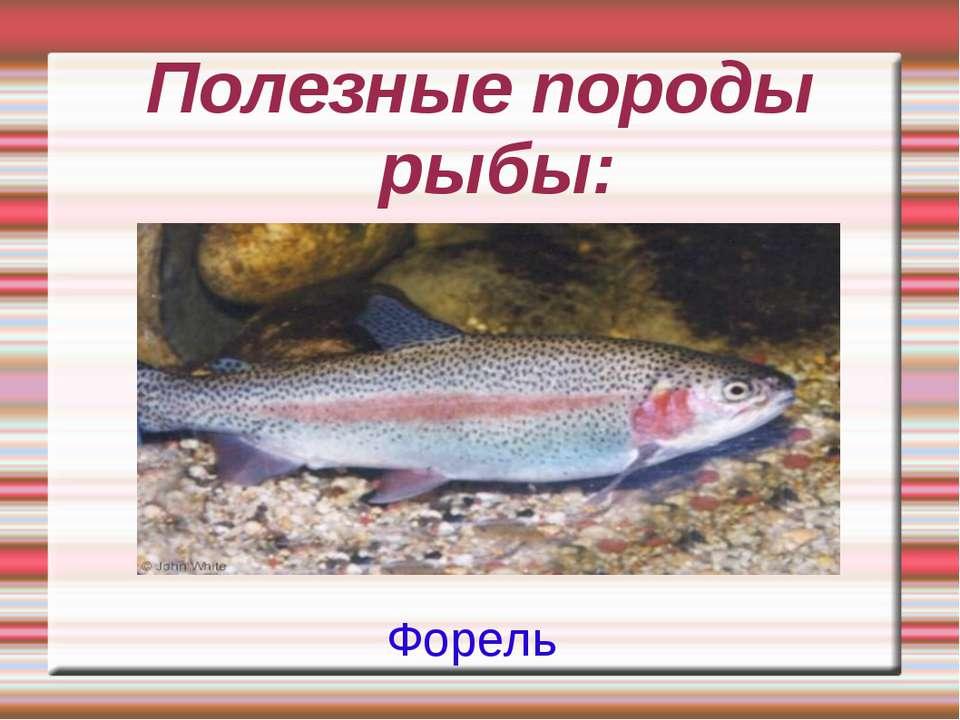 Полезные породы рыбы: Форель