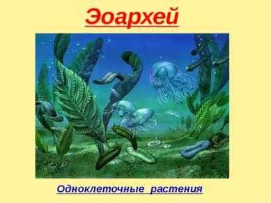 Эоархей Одноклеточные растения