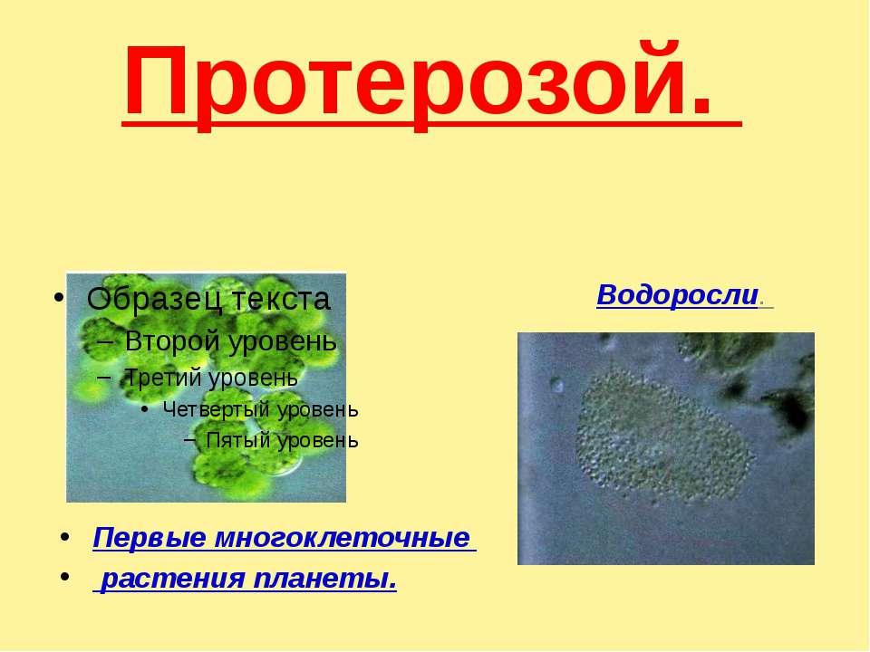 Протерозой. Водоросли. Первые многоклеточные растения планеты.