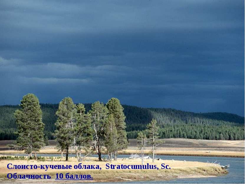 Слоисто-кучевые облака, Stratocumulus, Sc. Облачность 10 баллов.