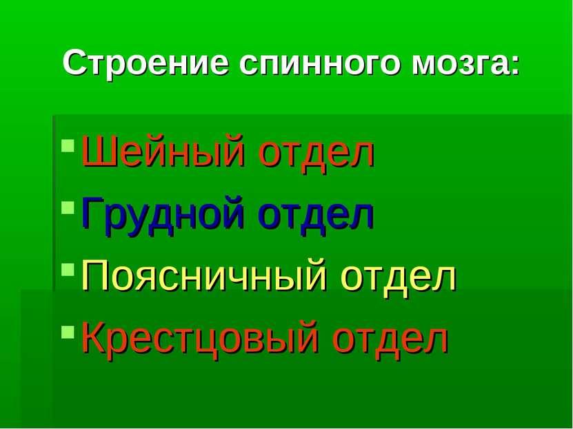 Строение спинного мозга: Шейный отдел Грудной отдел Поясничный отдел Крестцов...