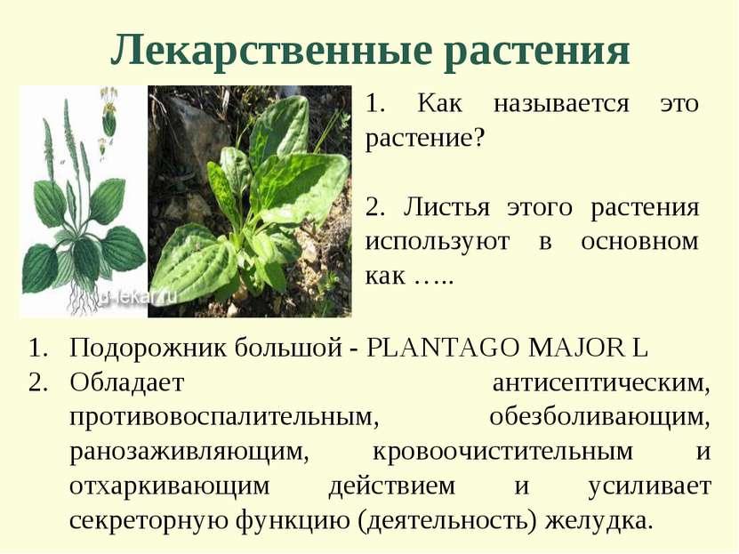 Лекарственные растения 1. Как называется это растение? 2. Листья этого растен...