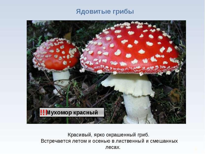 * Ядовитые грибы !!! Красивый, ярко окрашенный гриб. Встречается летом и осен...